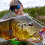 Peacock Bass Colombia